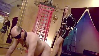 DomNation - MY PETS INTRODUCTION TO AGONY! Starring Mistress Renee Trevi